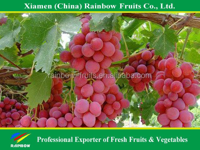 60248477669 - Seedless grape cultivars ...