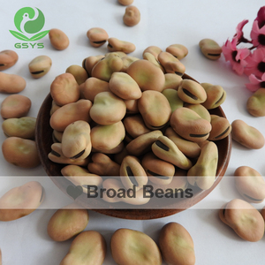China Qinghai Origin competitive price dry broad beans/Fava Beans