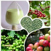 Pure natural Green Coffee bean extract