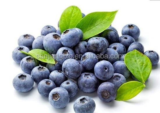 Manufacturer Supply Blueberry Extract 25% Anthocyanidin Bilberry extract 100% Natural