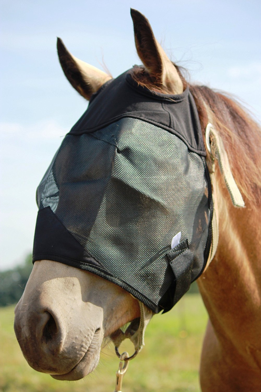 Standard Horse Fly Mask without ears and nose, All Around Barn, Stable, Pasture, Trail Riding Fly and Sun Protection Standard Fly Mask - Style: No Ears or Nose - All Sizes