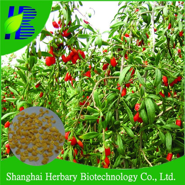 2017 Hot sale goji wolfberry seeds for planting, gou qi seeds