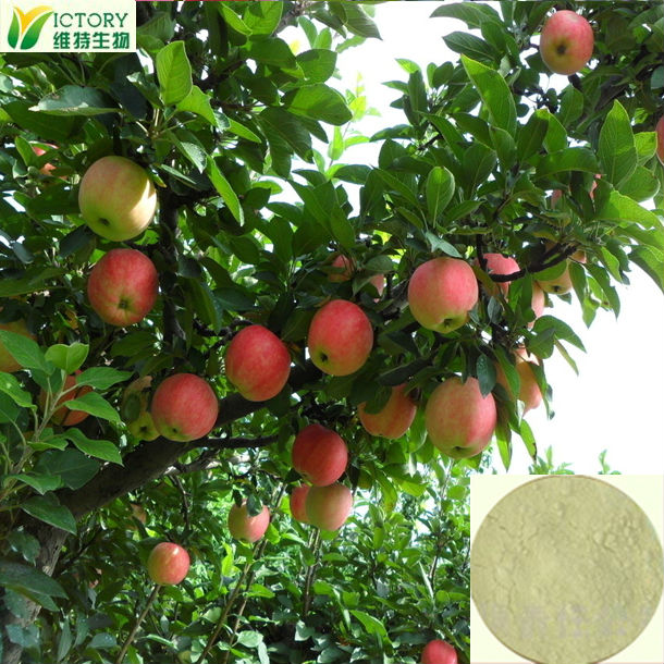 2014 Factory direct sales bitter apple extract with free samples