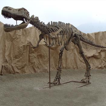 Oad1739 Real Life Size Dinosaur Fossils Dinosaur Skeleton - Buy Dinosaur  Fossils,Dinosaur Skeleton,Lifesize Dinosaur Fossils Product on Alibaba com