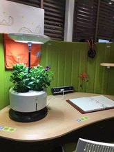 office desktop portable hydroponic mini garden planter