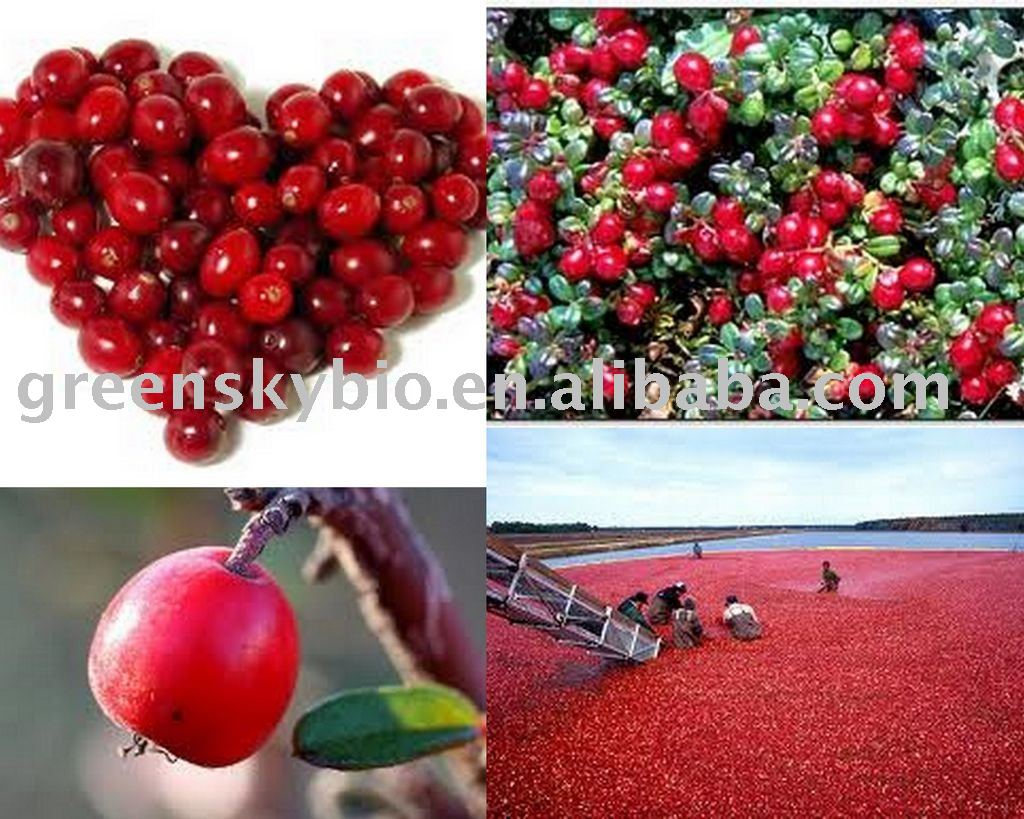 Cranberry P.E Herb Extract