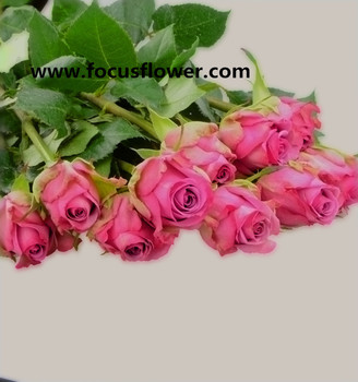 high quality names of flowers used for decoration c fresh black roses in delhi