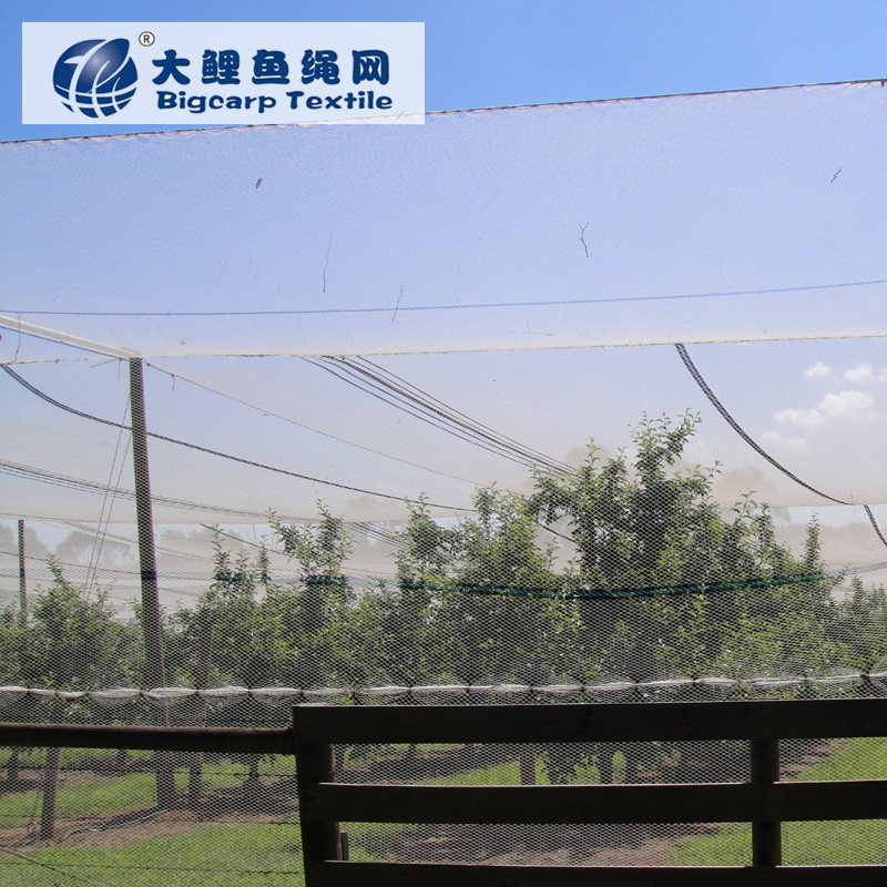 High Strength Hdpe Nylon Vineyard Bird Netting - Buy Bird Netting,Bird  Netting,Bird Netting Product on Alibaba com