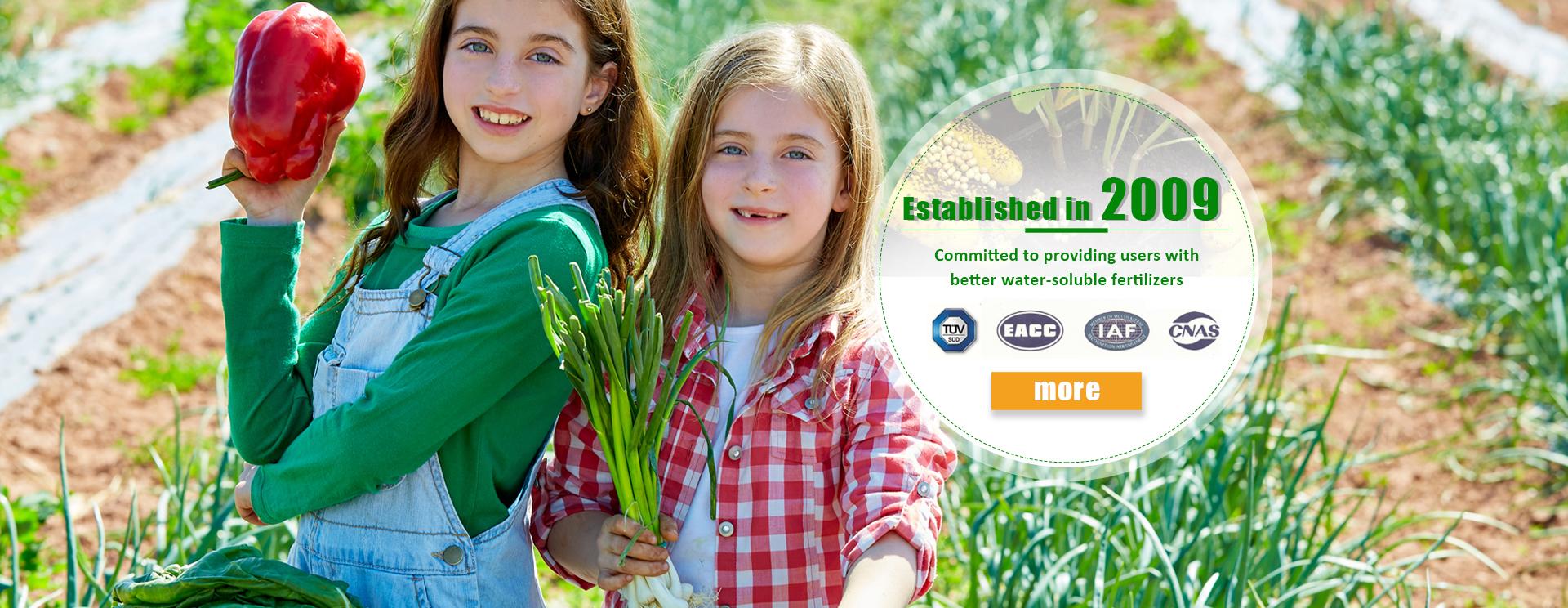 OEM 100% powder the water soluble compound npk fertilizer 20-20-20 19-19-19 18-18-18 best prices