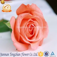 2016 Latest Decorative Valentines day flowers gift internet rose florist