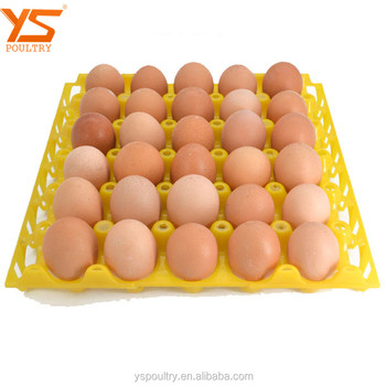 PE Plastic Quail Chicken Egg Hatch / Incubator Tray For Sale
