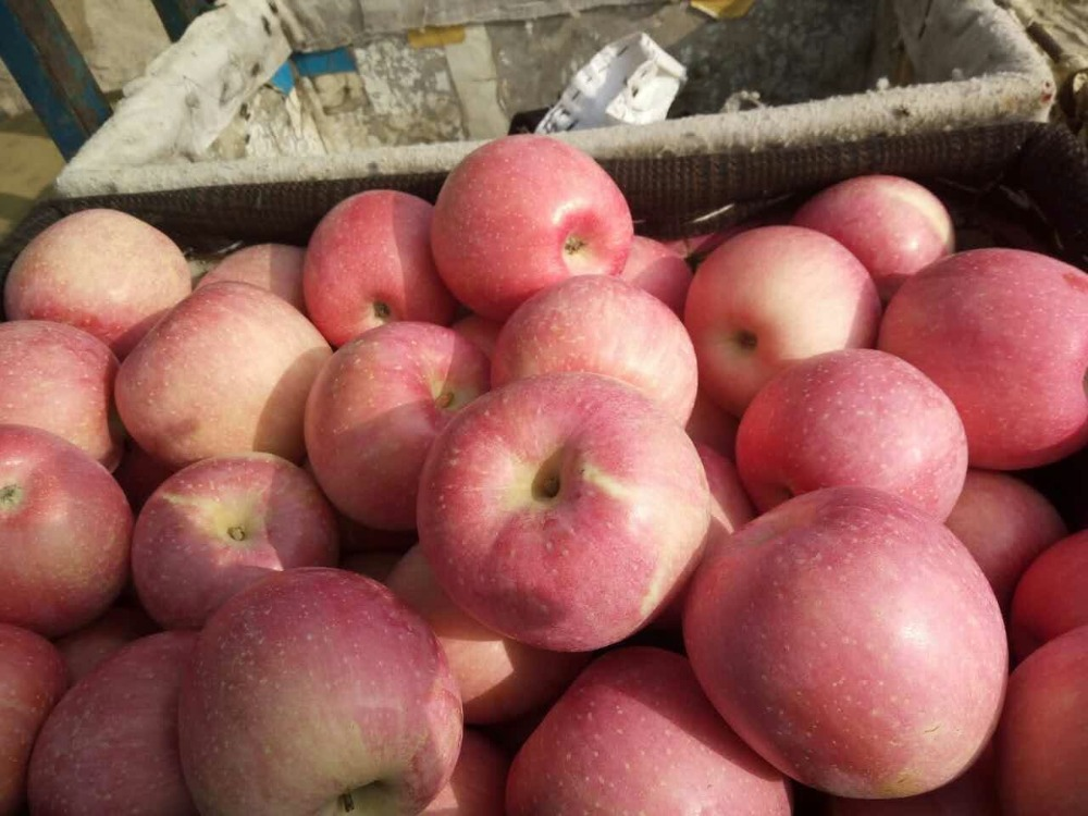 2016NEW SHANXI FUJI <strong>APPLES</strong>
