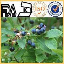 LLow Heavy Metal and best quality bilberry extract vaccinium myrtillus natural anthocyanidins supplement