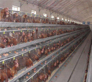 Best choice poultry layer chicken cage for chicken farm