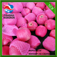 pink lady apple pink apple pink lady chinese pink lady price pink lady exporter
