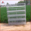 Latest Design Automatic Quail Putting Cage With Good Quality(H & A type,wholesale,good quality,Made in China)