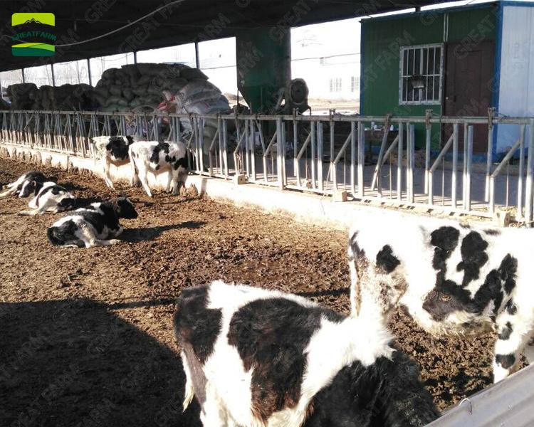 GREAT FARM cattle farm equipment cattle fence galvanized cattle headlock
