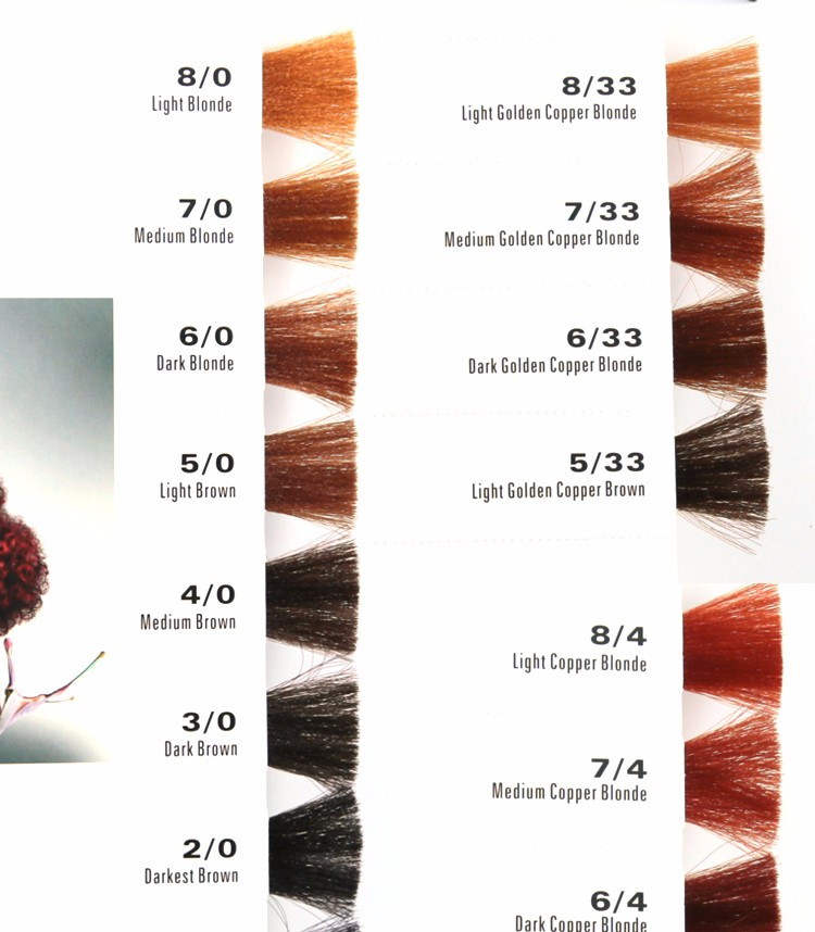 oem manufacturer salon professional hair dye color chartcolor swatch book - Color Swatch Book