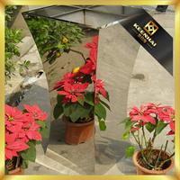 Outdoor Metal Planter Pot Stand Garden Flower Pot Tall Planter
