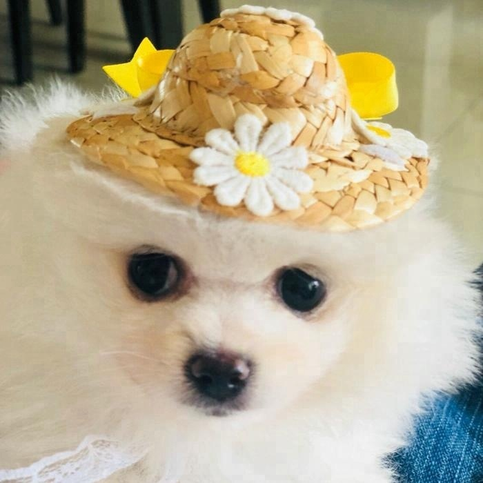 2018 New summer pet cat dog hats handmade chic pet sun cap accessories