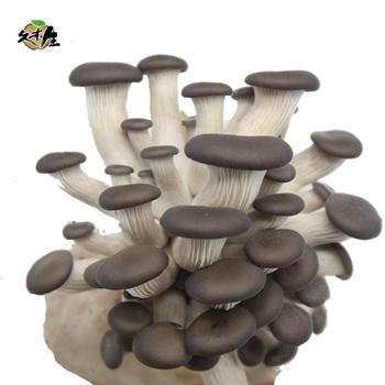 Best seller cultivating fresh oyster mushroom spawn grow kit, View grow  kit, Jiumusheng Product Details from Huadian City Jiumusheng Fungus  Industry