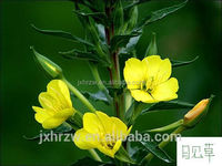 Organic evening primrose oil benefits label printing available at rock-bottom pricing