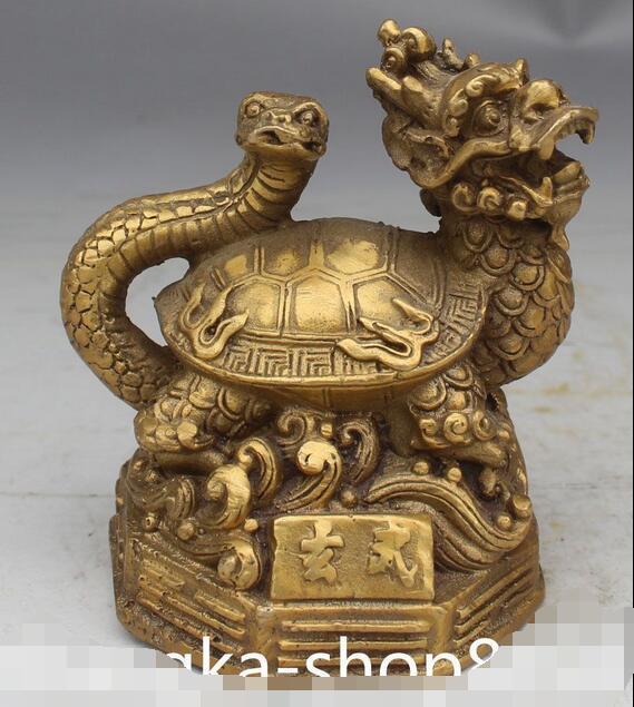 Drago tartaruga acquista a poco prezzo drago tartaruga for Tartaruga prezzo