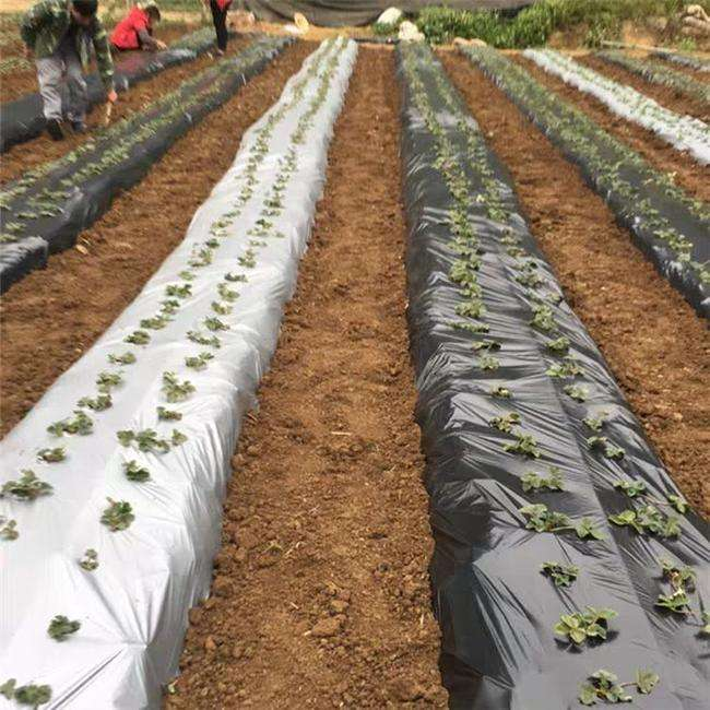 agriculture vegetables crops compostable mulch paper / silver black plastic biodegradable mulching film