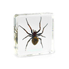 Real Spider Specimen Insect Education Equipment