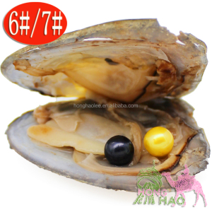 Stylish black and yellow freshwater pearl oyster vacuum pack 6-7MM round AAAA Akoya pearl in oyster 30pcs wish pearl gift