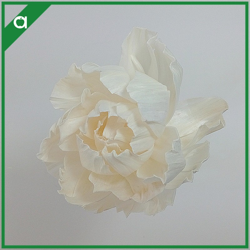 Wholesale Artificail Sola Flower for Fragrance Diffuser