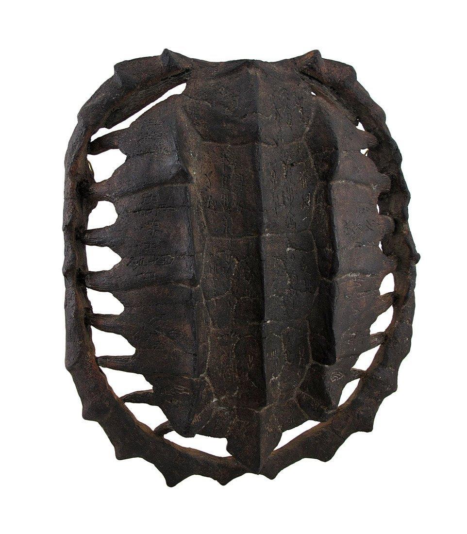 turtle shell back brace - HD962×1100
