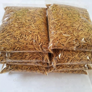 Farm Breed Dried Feeder Mealworms for birds snakes lizards amphibians treats