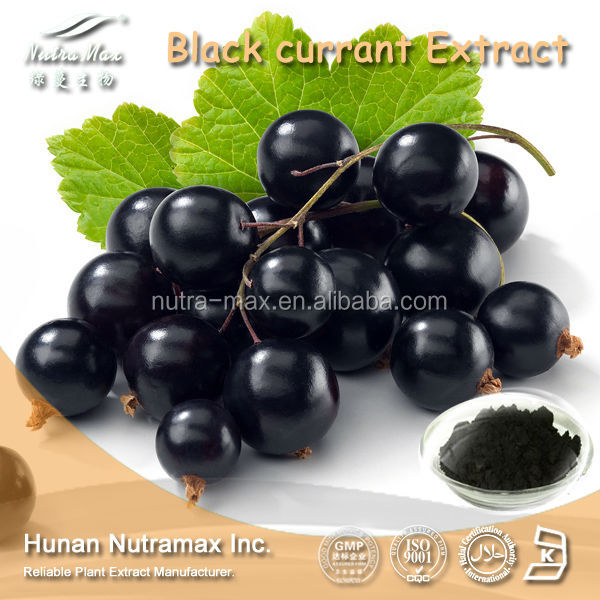 High quality Black Currant P.E Proanthocyandins 5-70%