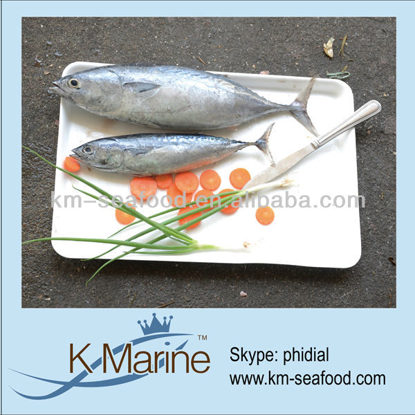 Carton or Woven Bag Packed Fat Content 16%-18% New Catching Frozen Bonito Tuna