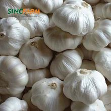 Importer to buy fresh garlic from China with good quality and cheaper price