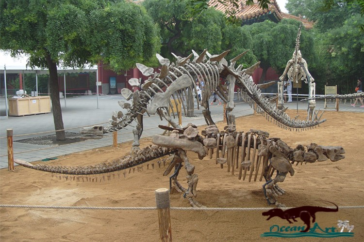 OA5172 High quality life size dinosaur skeleton