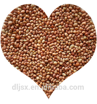 Jsx Superior Cow Peas Competitive Price First Grade Cowpea