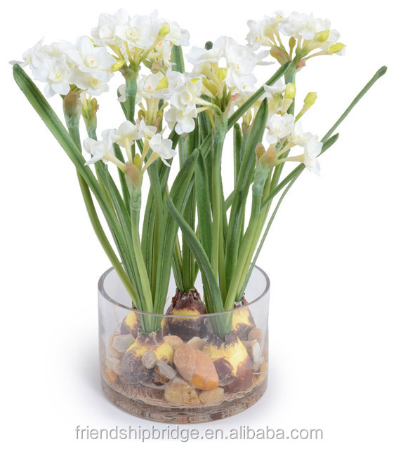 Paperwhite Flower Narcissus Tazetta Bulbs - Buy Bunch-flowered ...