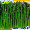 Frozen Vegetables And Fruits Green Asparagus Tips