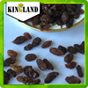 Dried Fruits Wholesale Red Sultana Raisin Price