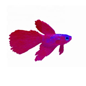 Factory direct artificial Betta fish For Aquarium Decoration