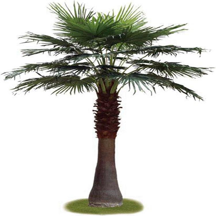 chinese manufactorer wholesale plastic decorative artificial fan palm tree buy plastic palm. Black Bedroom Furniture Sets. Home Design Ideas