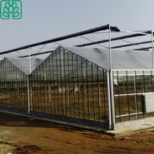 Steel Frame Structure PC Sheet Cover Material Agricultural Commercial Greenhouse for Sale