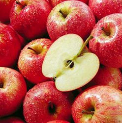 Organic apple root extract in comestic
