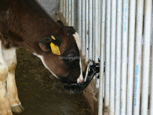 Animal Drinking Bowl for Cow drinking 2.7L TRWA-00-LH