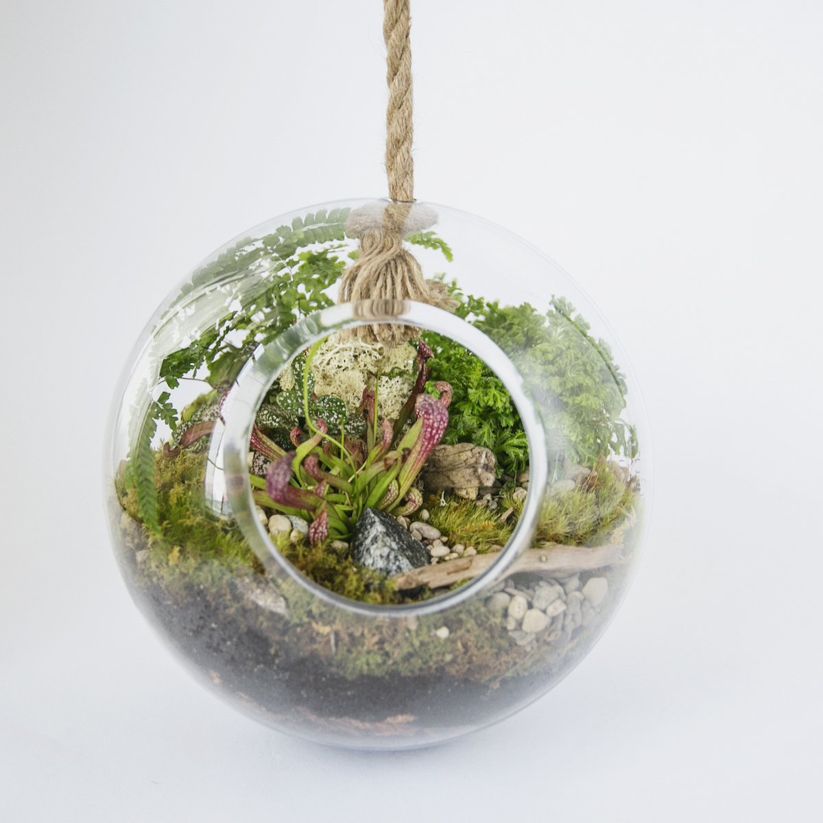 Cheap Diy Glass Terrarium Find Diy Glass Terrarium Deals On Line At