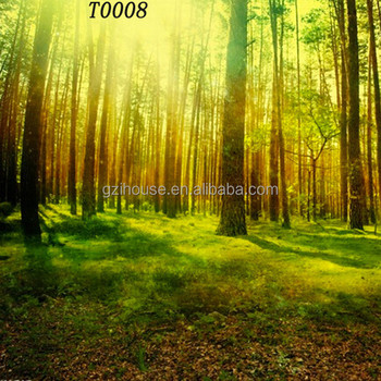 beautiful forest trees scenery home wall mural in wallpaper - buy