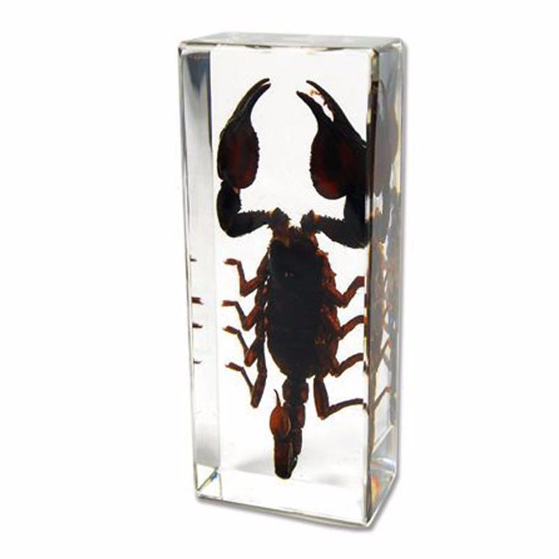 Crystal glue embedded in scorpion specimens resin embedded insect crafts insect specimen customization