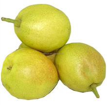 Hot Sale Chinese fresh Shandong Pear